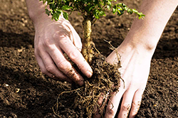 Planting new trees with Baum Tree Care