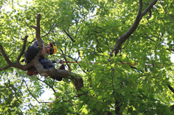 Pruning with Baum Tree Care