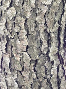 Super close up of damaged tree bark