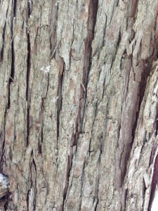 Close look at damaged bark on tree