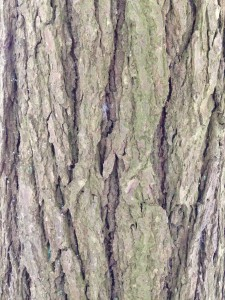 Close up shot of tree bark