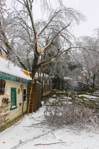 Ice storm damages trees and causes collapse