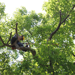Tree Services from Baum Tree Care