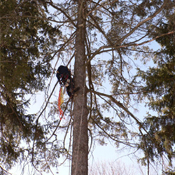 Scaling a tree trunk to perform care services