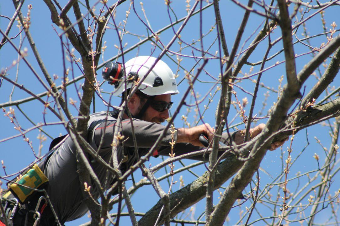 Skilled arborist repairing a tree