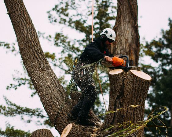 Tree surgeon in action