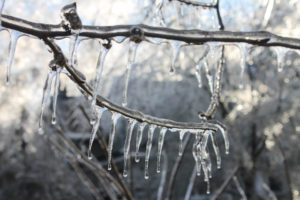 Thick ice accretion can add a considerable amount of weight to the branches of a tree.