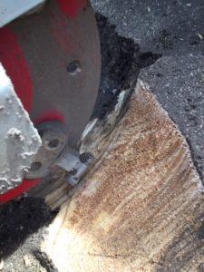Stump Grinder At work