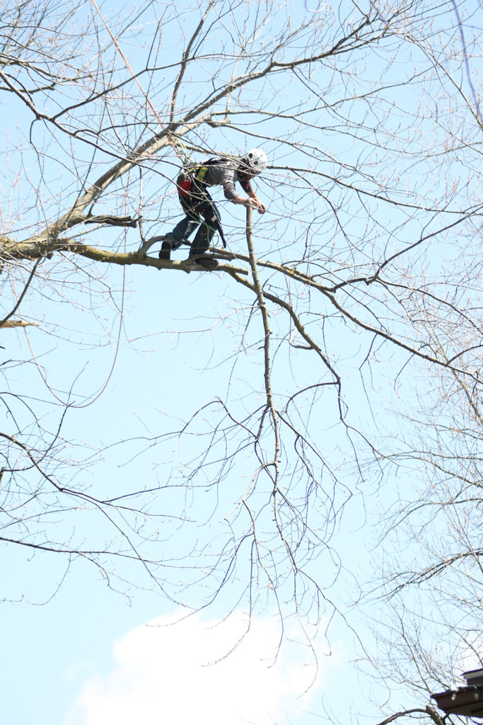 Phil in the tree