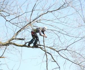 phil pruning tree