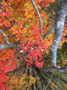 Fall Colour Inside The Crown