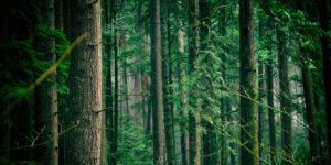 Baum Professional Tree Care