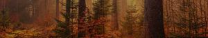 Contact Baum Tree Care