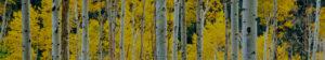 Baum Tree Care Service