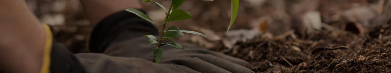 Baum Tree Planting